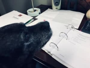 Office Manager Madge, our resident pup, looks over our job specifications for estimating